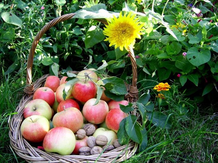 Cos cu imparteala pentru Sfantul Dumitru cu nuci si mere