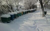Stupii iarna