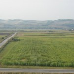 arenda teren agricol