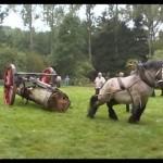 cel mai puternic cal din lume