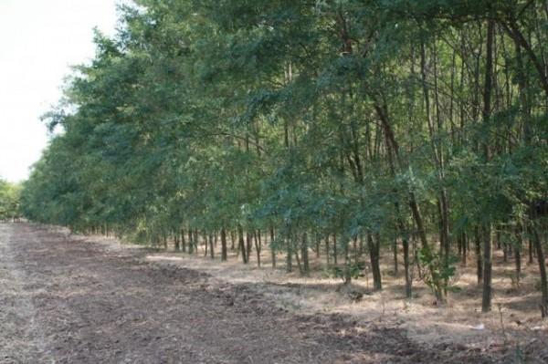 perdelele forestiere
