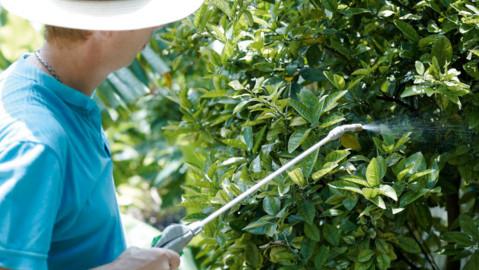 Stropirea chimica a pomilor si vitei de vie