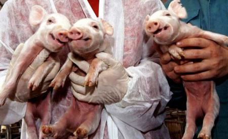 animale clonate innterzise in UE