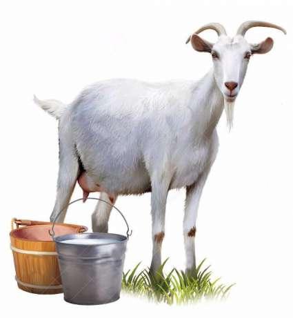 lapte de capra, beneficii