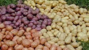 soiuri de cartofi autohtone