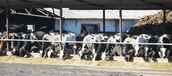 vaci-masuri-de-bunastare-la-bovine