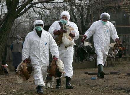 focarr-gripa-aviara-constanta