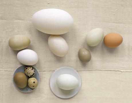 tipuri-oua-sanatoase-gaina-rata-prepelita