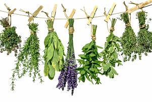 plante aromatice si medicinalee