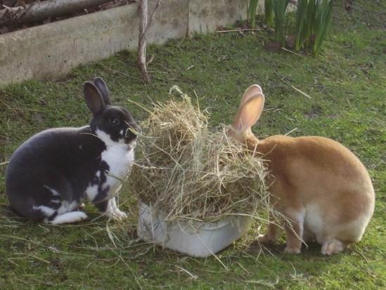 rase iepuri afaceri de familie