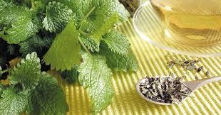 plante medicinale cultura de roinita